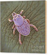 Tick Ixodes Wood Print