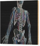Human Vascular System Wood Print