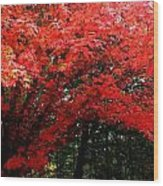 Fall Explosion Of Color Wood Print