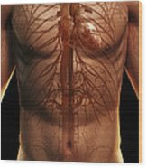 The Cardiovascular System Wood Print