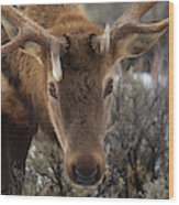 Usa, Wyoming, Yellowstone National Park Wood Print