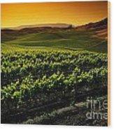 In A Vineyard Wood Print
