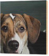 Portrait Of A Mixed Dog Wood Print