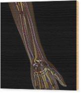 The Cardiovascular System Wood Print
