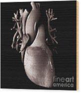 Heart Anatomy Wood Print