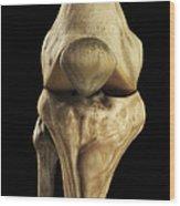 Knee Bones Right Wood Print