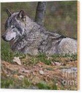 Timber Wolf Wood Print