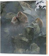Macaque Du Japon Macaca Fuscata Wood Print