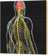 Male Nervous System Wood Print