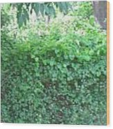 Camera Peak Thru Nature Buy Faa Print Products Or Down Load For Self Printing Navin Joshi Rights Man Wood Print