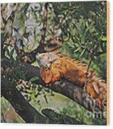 25- Iguanas Wood Print