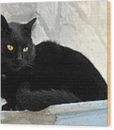 Cat In Hydra Island Wood Print