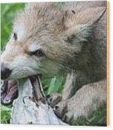 Gray Wolf Pup Wood Print