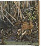 King Rails In A Wetland Wood Print