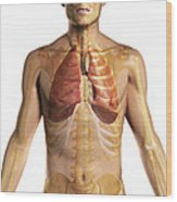 The Respiratory System Wood Print