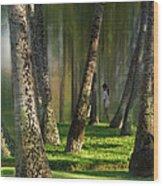 2794 Wood Print
