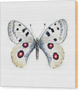 28 Apollo Butterfly Wood Print