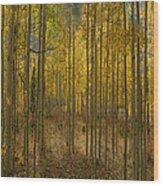 2811 Wood Print