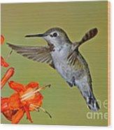 Annas Hummingbird Wood Print