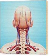 Human Cardiovascular System Wood Print
