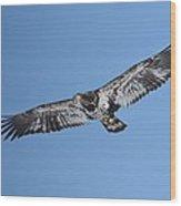 2nd Year Flight In The Sun Wood Print