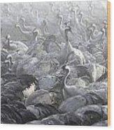 Flock Of Common Crane  Wood Print