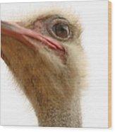 Ostrich Closeup Wood Print