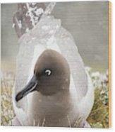 A Light Mantled Albatross Wood Print