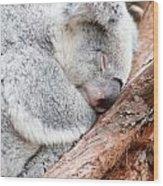 Adorable Koala Bear Taking A Nap Sleeping On A Tree Wood Print