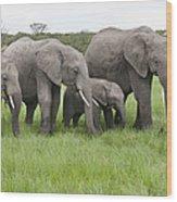 African Elephants Grazing  Kenya Wood Print