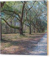 Allee Of Oaks Wood Print