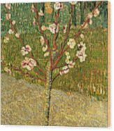 Almond Tree In Blossom Wood Print