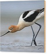 American Avocet Bird Portrait Wood Print