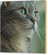 American Shorthair Cat Profile Wood Print