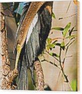 Anhinga Wood Print