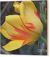 Tulip In The Wind Wood Print