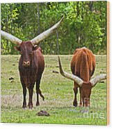 Ankole-watusi Cattle Wood Print