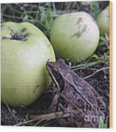3 Apples And A Frog Wood Print