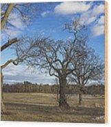 3 Appleton Trees Wood Print