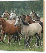 Arabian Horses Wood Print