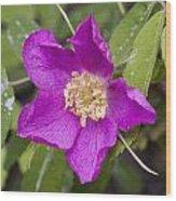 Arctic Rose Wood Print