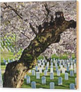 Arlington National Cemetary Wood Print