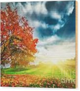 Autumn Fall Landscape In Park Wood Print