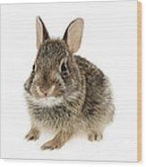 Baby Cottontail Bunny Rabbit Wood Print by Elena Elisseeva