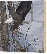 Bald Eagle   #8309 Wood Print
