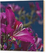 Bauhinia Purpurea - Hawaiian Orchid Tree Wood Print