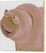 Bdelloid Rotifer, Sem Wood Print