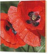 Beautiful Poppies 2 Wood Print by Carol Lynch
