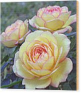 3 Beautiful Yellow Roses Wood Print by Jo Ann