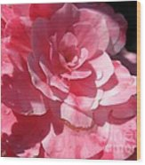 Begonia Named Nonstop Pink Wood Print